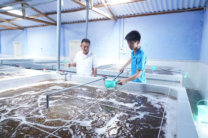 Ninh Thuận hướng đến là trung tâm sản xuất tôm giống chất lượng cao