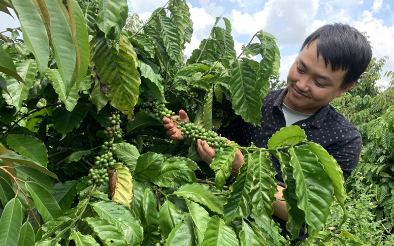 Hướng đến vùng nguyên liệu cà phê đặc sản -0