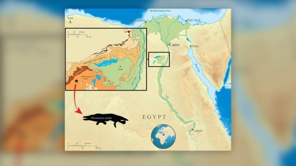 Ai Cập tìm thấy hóa thạch cá voi bốn chân 43 triệu năm tuổi -0