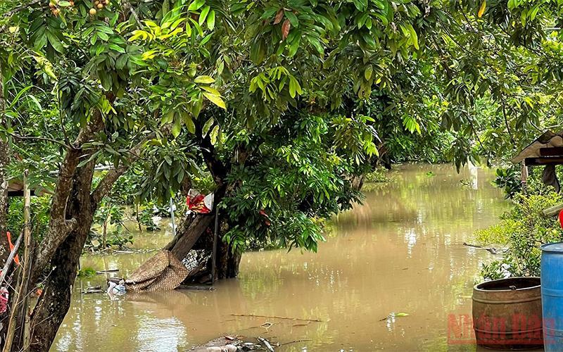 Sạt lở bờ sông cuốn trôi nhà cửa, ngập vườn cây ăn quả tại Bến Tre -0