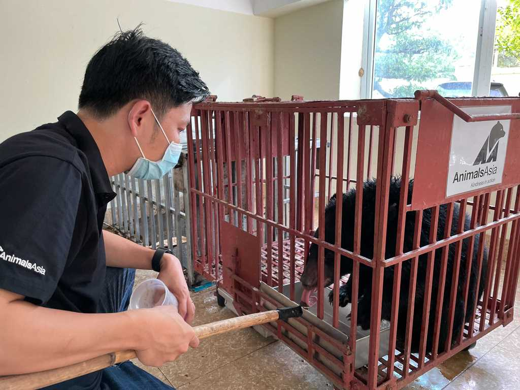 Cứu hộ cá thể gấu ngựa từ Điện Biên -0