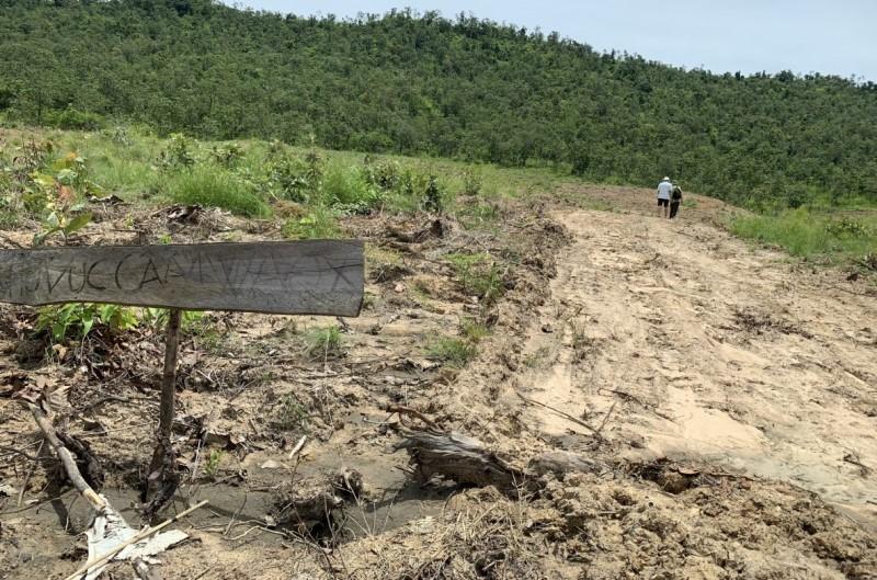 Ngang nhiên phá rừng phòng hộ để trồng bạch đàn tại Gia Lai -0