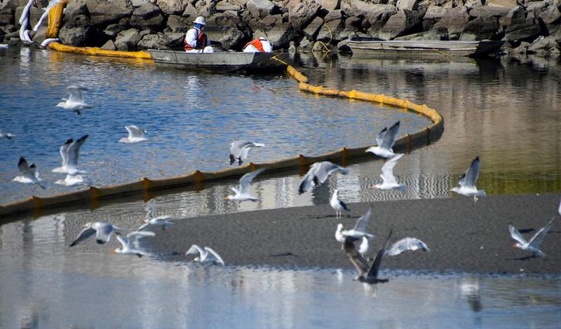 """Cá chết, vùng đất ngập nước bị phá hoại sau sự cố tràn dầu """"thảm khốc"""" ở California -0"""