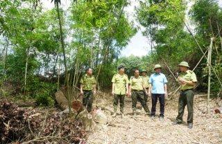 Khai thác trái phép 150 cây rừng phòng hộ ở Định Hóa (Thái Nguyên)
