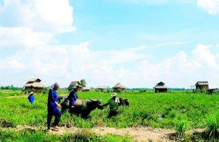 Khởi sắc du lịch nông nghiệp ở Đồng Tháp