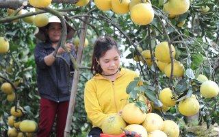 Phát triển bền vững cây ăn quả có múi  ở các tỉnh phía bắc