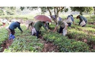 Huyện Bạch Thông khơi dậy sức dân xây dựng nông thôn mới