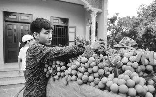 Bắc Giang xây dựng thương hiệu cho nông sản